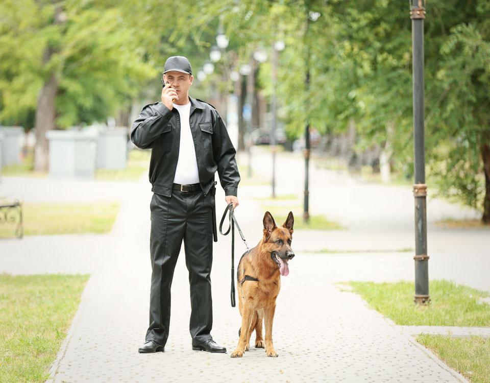 Rondes à pied avec un chien